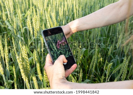 Agronomist using smart phone camera mobile app Stock photo © stevanovicigor