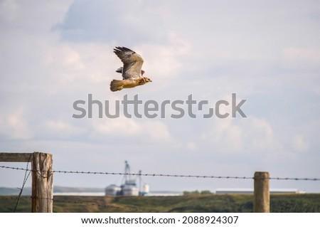 sereg · elvesz · repülés - stock fotó © pictureguy