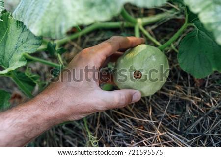 Agriculteur augmenté organique jardin Homme Photo stock © stevanovicigor