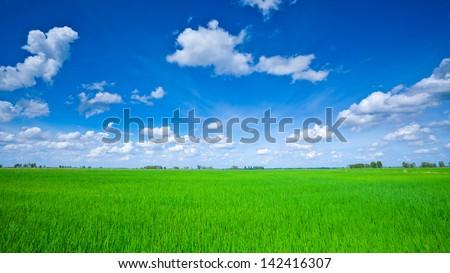 arrozal · grama · verde · blue · sky · nuvem · nublado · paisagem - foto stock © galitskaya