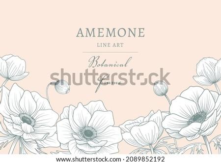 poppy anemone 05 stock photo © lianem