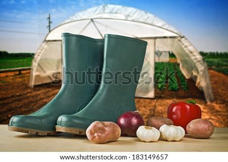 campo · serra · crescita · verdura · coperto · plastica - foto d'archivio © stevanovicigor