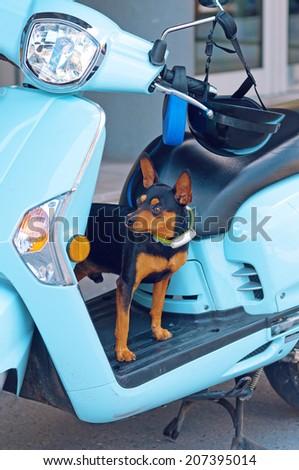 Hond cute weinig Blauw wachten Stockfoto © stevanovicigor