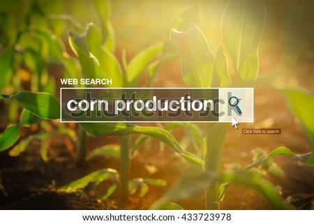Corn production in internet browser search box Stock photo © stevanovicigor