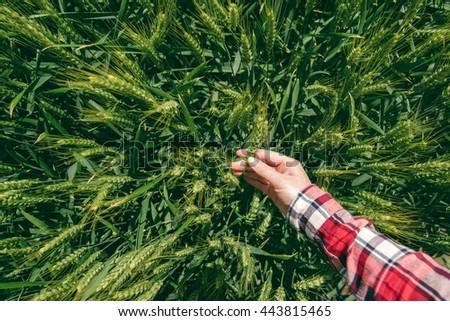 femenino · mano · agrícola · cebada · campo - foto stock © stevanovicigor