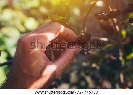 agriculteur · augmenté · organique · jardin · Homme - photo stock © stevanovicigor