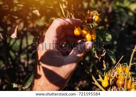 Сток-фото: фермер · фрукты · взрослый · органический