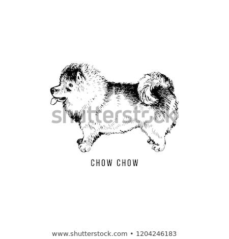 Chow Chow Dog Breed Cartoon Retro Drawing Stock photo © mart