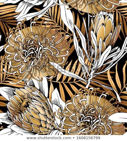 Bağbozumu model palmiye yaprağı vektör Retro Stok fotoğraf © frimufilms