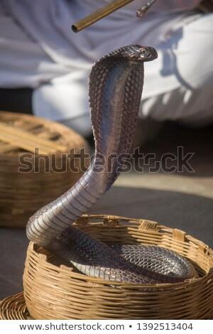 Kobra kosár illusztráció vicces játék turizmus Stock fotó © adrenalina