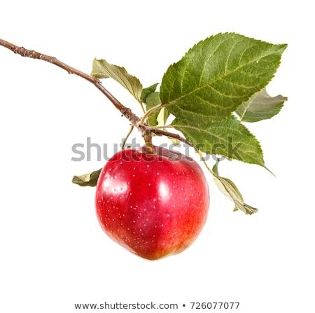 közelkép · fenék · piros · zöld · alma · növekvő - stock fotó © lunamarina