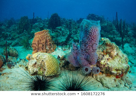 sponge in a sea fan stock photo © stephankerkhofs