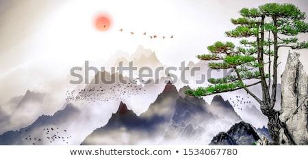 Zen pijnboom detail japans tuin kyoto Stockfoto © smithore
