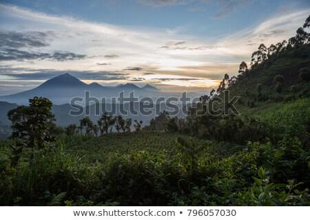 Stok fotoğraf: Goril · bulut · orman · dağ · Uganda · Afrika