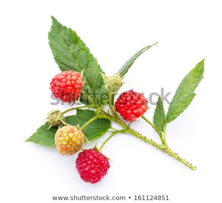 Raspberry Thorn Stock photo © brm1949