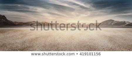 風景 亜熱帯の サボテン 山 ストックフォト © Hofmeester