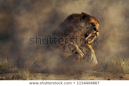 saber tooth tiger Stock photo © pcanzo