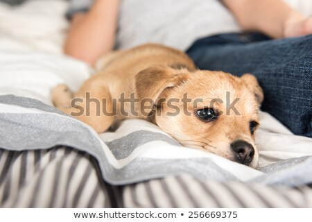 happy mixed breed and a toy stock photo © eriklam