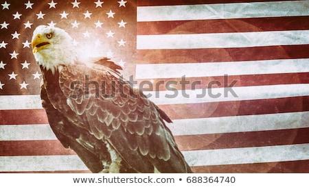bandeira · americana · estrelas · dia · ilustração · vetor - foto stock © balasoiu