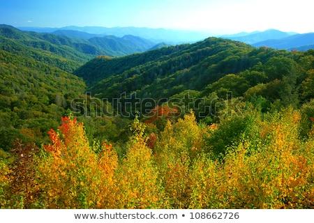 squirrel in the wilderness in the north carolina mountains Stock photo © alex_grichenko