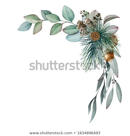 gland · vert · fruits · chêne · forêt · sauvage - photo stock © lunamarina