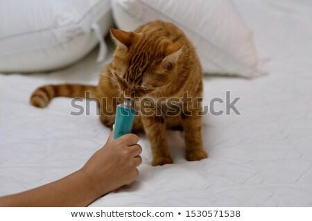 Zencefil kedi yavrusu turuncu ayakta mavi Stok fotoğraf © dnsphotography
