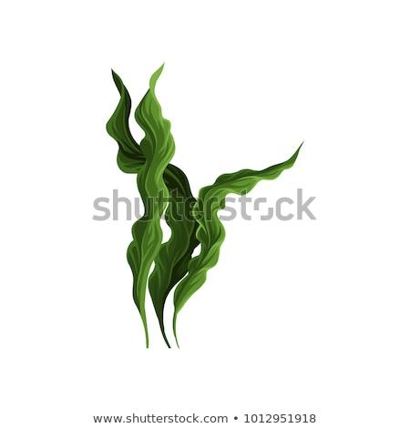 Hínár friss zöld fehér kavicsok víz Stock fotó © prill