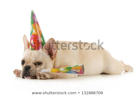 english bulldog party hat blowing on horn stock photo © willeecole