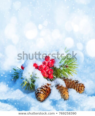 Winter mountain ash branch Stock photo © Dazdraperma