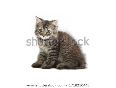 Gattino bianco riflessione baby occhi Foto d'archivio © vlad_star