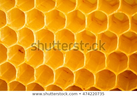 close up honeycombs stock photo © deyangeorgiev