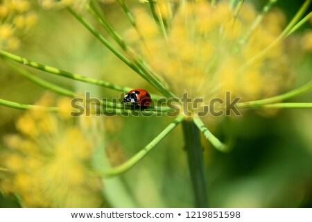 Katicabogár sétál szár citromsárga természet levél Stock fotó © tito