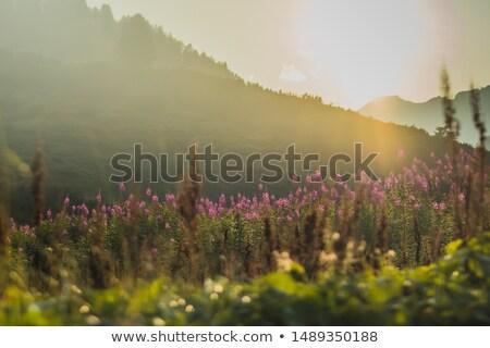 manzara · geç · öğleden · sonra · ışık · İspanyolca · yaz - stok fotoğraf © diabluses