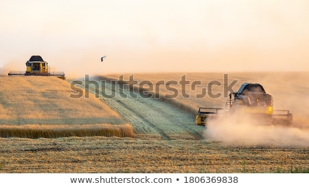 Graan oogst gerst tarwe stro voedsel Stockfoto © jarin13