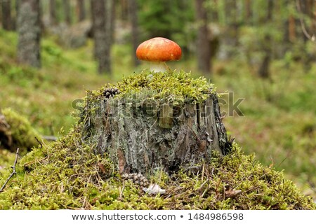 Background forest mushroom tree stumps Stock photo © fotoaloja