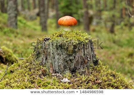 Foto stock: Floresta · cogumelo · árvore · luz · fundo · verão