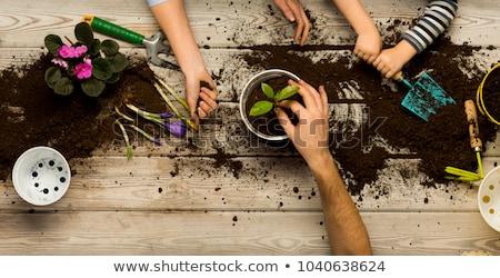 child gardener stock photo © jamdesign