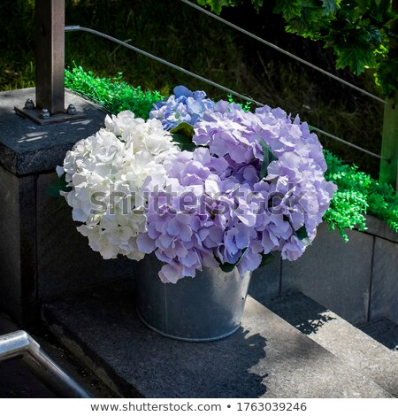 artificial hydrangea in a pot Stock photo © RuslanOmega
