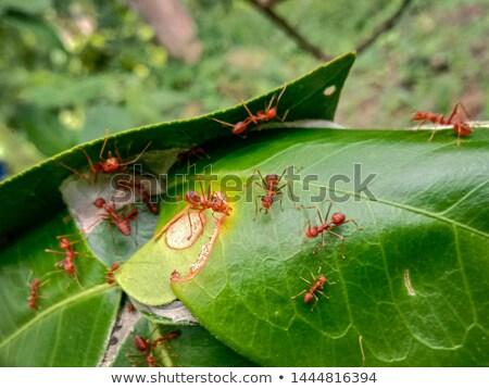 Famiglia formiche sorriso erba foresta divertente Foto d'archivio © adrenalina