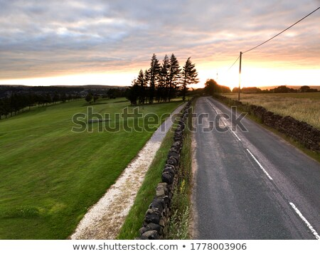 ver · flor · pôr · do · sol · ocidente · yorkshire · natureza - foto stock © chris2766