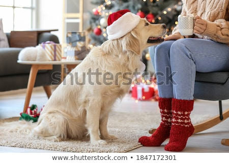 christmas holiday dog stock photo © lightsource