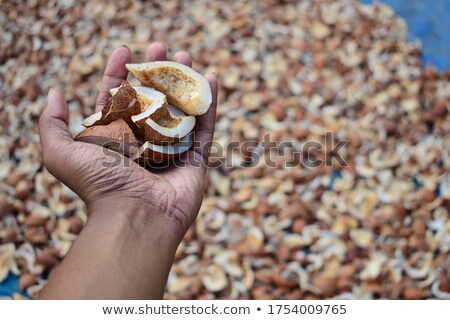Coconut and pieces of his shell stock photo © alrisha