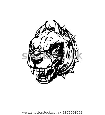 Perro cabeza negro rottweiler bulldog Foto stock © HunterX