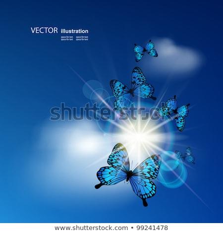 Pillangók repülés kék felhős égbolt vektor Stock fotó © doddis