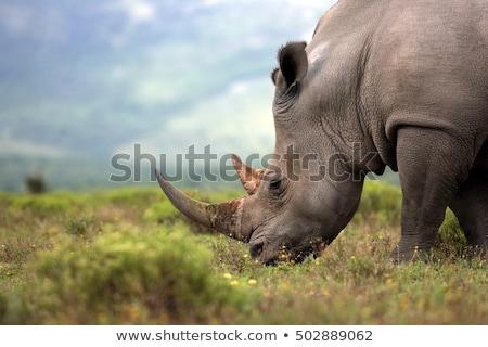 白 · サイ · 公園 · 南アフリカ · 動物 - ストックフォト © simoneeman
