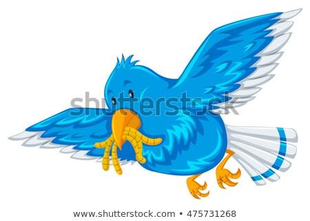Mavi kuş ağız örnek doğa arka plan Stok fotoğraf © bluering