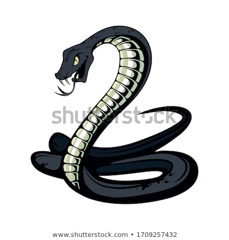 Common snakes Stock photo © bluering