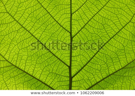 Extreme лист текстуры мелкий области Сток-фото © ambientideas