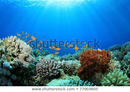 коралловый риф подводного морем небольшой рыбы солнце Сток-фото © bank215