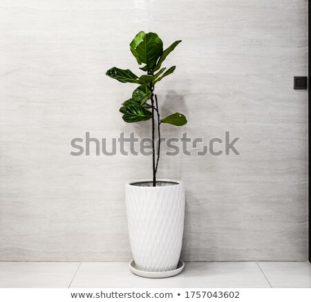 tree isolated against white Stock photo © almir1968